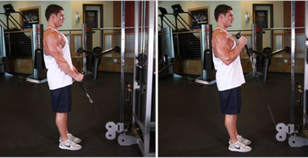 cable-hammer-curls