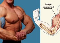 for-bigger-biceps-do-this-exercise