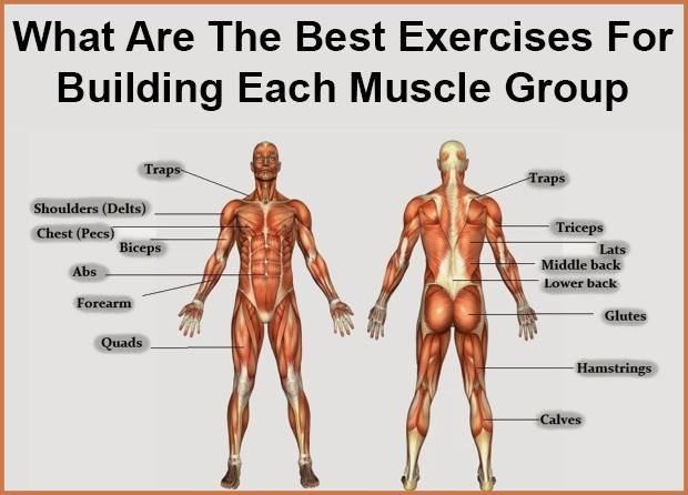 How To Build Muscle For Each Group