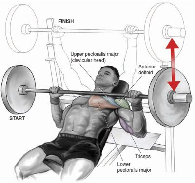 incline-barbell-press