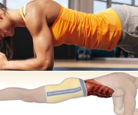 plank-muscles-worked