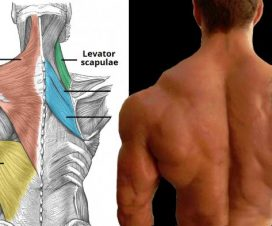 tips-to-upper-back