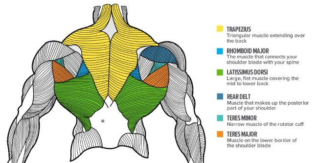 upper-back-anatomy