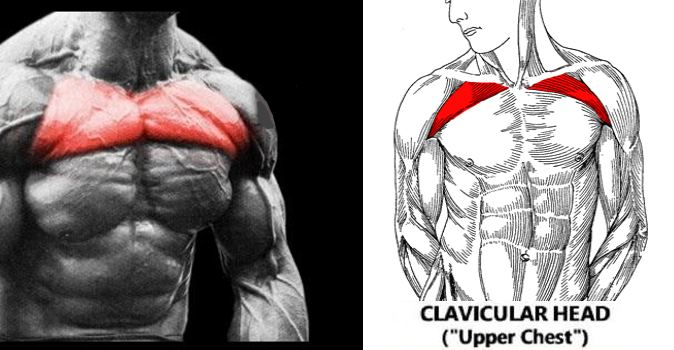 5 Exercises To Build The Upper Chest Fitness And Power