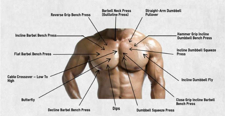 The Best Chest Exercises For BeginnersPlus Workout