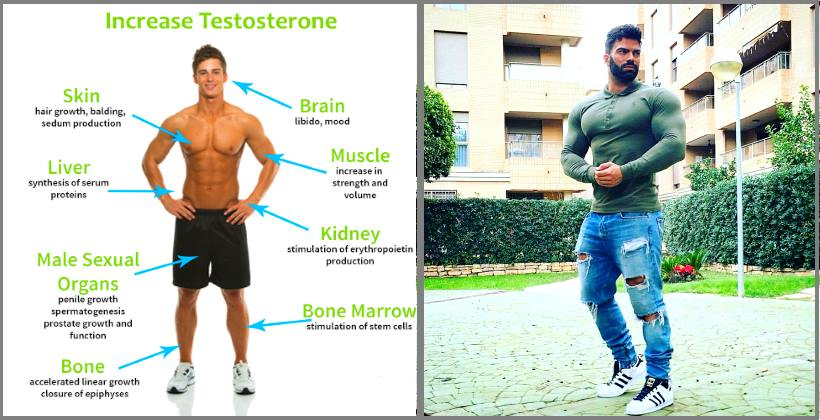 increase-muscle-building-hormones