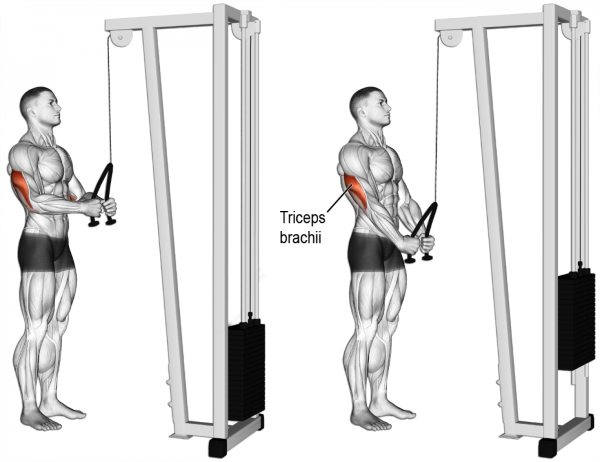 triceps-tope-pushdown