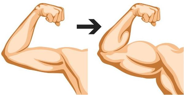 5-exercises-to-build-big-biceps
