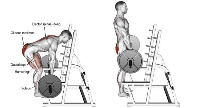 barbell-rack-pull