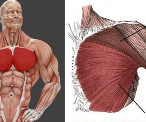 build-a-massive-chest-5-must-do-chest-exercises