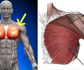 massive-chest-5-must-do-chest-exercises