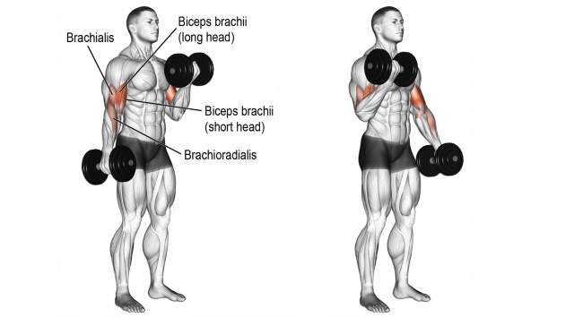 standing-dumbbell-curls