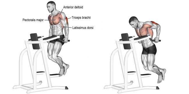 triceps-dip