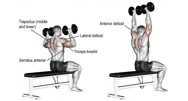 dumbbell-shoulder-press