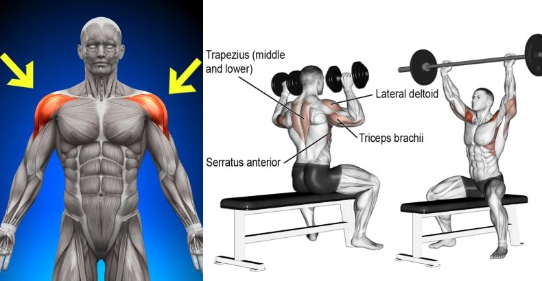 dumbbell-vs-barbell-shoulder-press-proper-technique-benefits