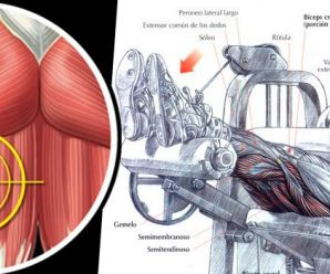 seated-hamstring-curl