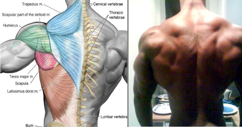 wide-back