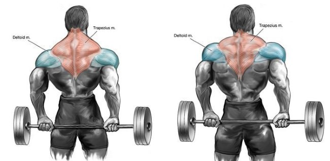 barbell-shrug-behind-the-back