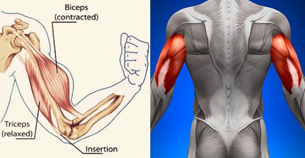 get-big-arms-the-ultimate-triceps-biceps-workout