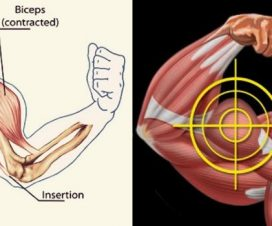 little-known-hacks-bigger-arms