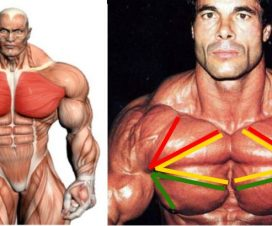 most-effective-chest-exercises
