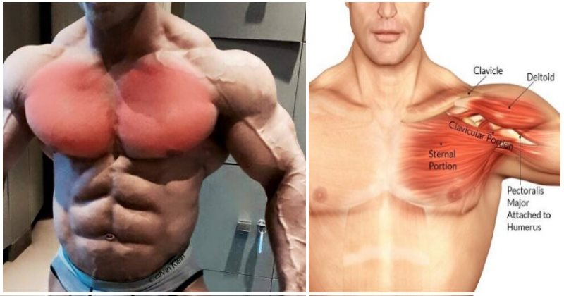 non-bench-chest-exercises