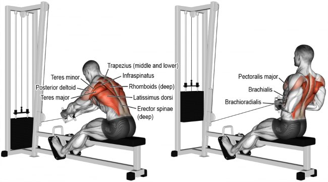 seated-cable-row