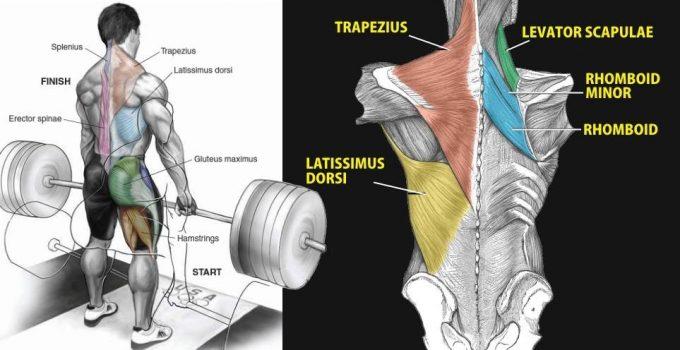 best-back-exercise
