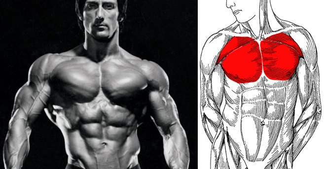 Frank Zane Chest Training
