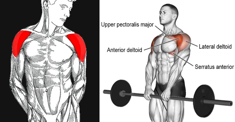 Front-Delt Assault - Fitness and Power