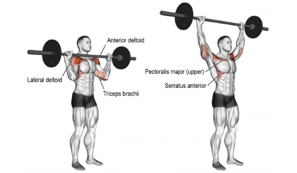 Image result for Front delt training: the Standing Shoulder Press