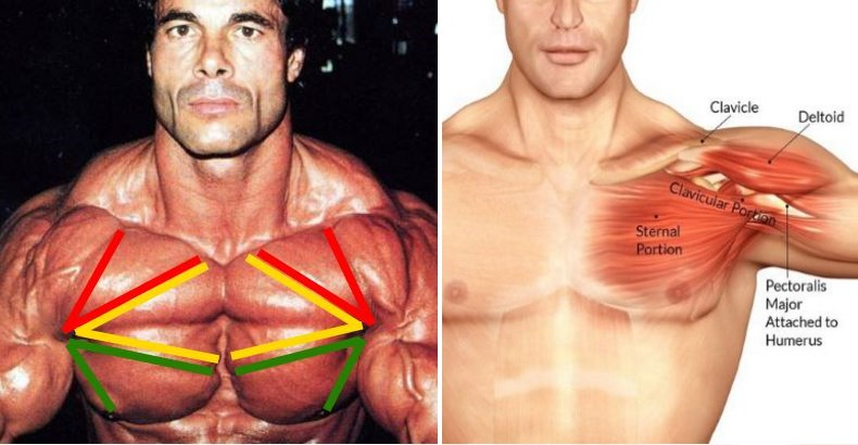 6-best-dumbbell-moves-for-a-bigger-chest