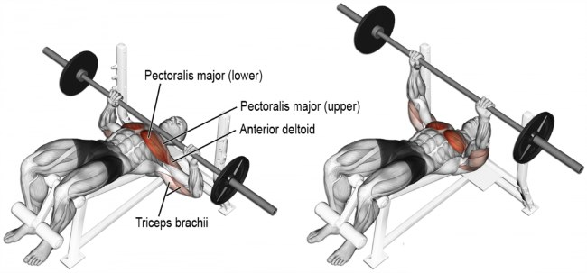 Decline Bench Press Exercise Guide & Tips - Fitness and Power