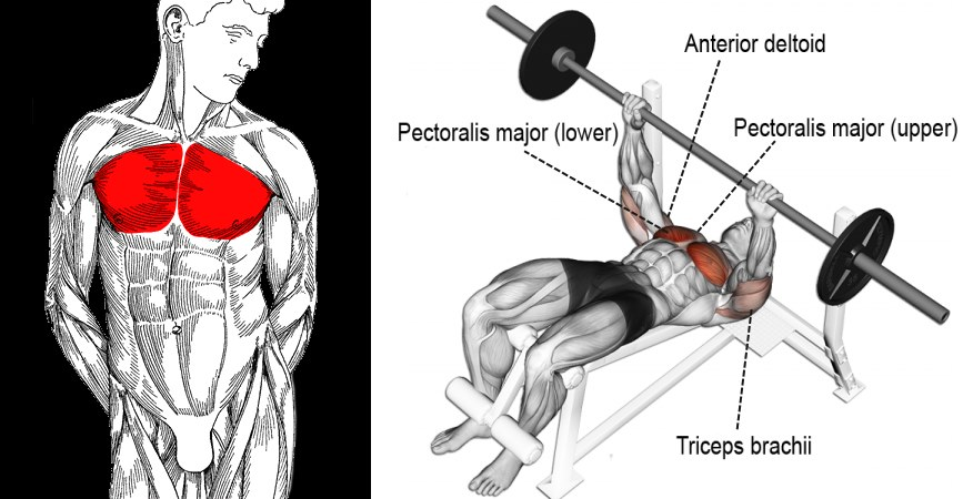 decline-bench-press-exercise-guide-and-tips