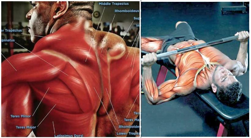 upper-body-mass-workout