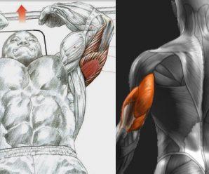 skullcrusher-version-for-your-triceps