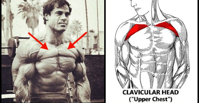 8-tips-for-building-a-big-upper-chest
