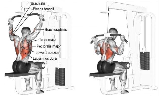 Image result for Lat pulldown