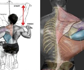 lat-pull-down-variations