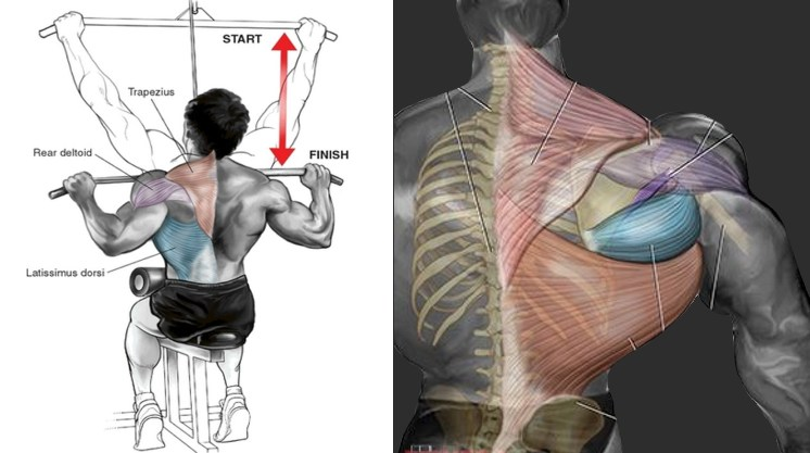Lat pull-down exercise in a bottle cardarine and stenabolic