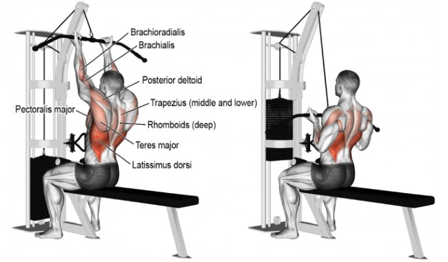 reverse-grip-lat-pull-down