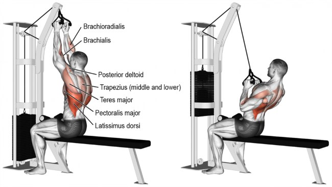 Muscle Building cardarine v bar Lat pulldown