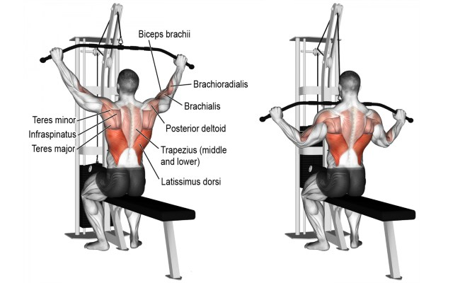 Wide grip  Lat pulldown Builds back muscle with andarine ostarine stack