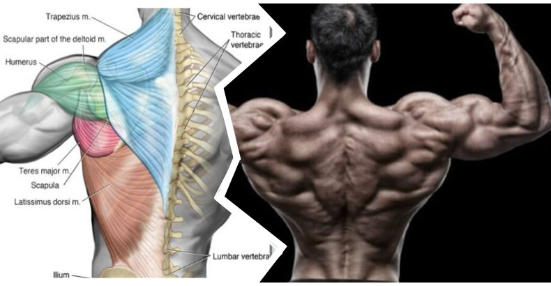 2-key-exercises-for-building-a-wide-back