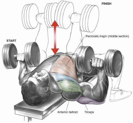 chest-superset-2