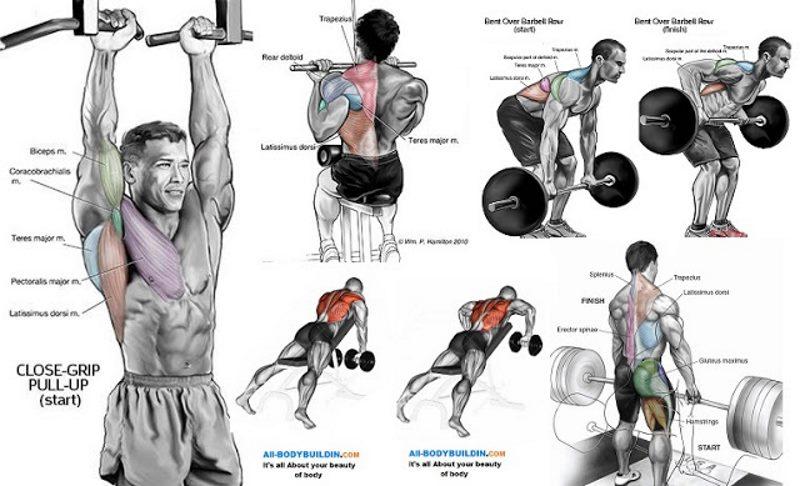 8-Week-Muscle-Building-Program