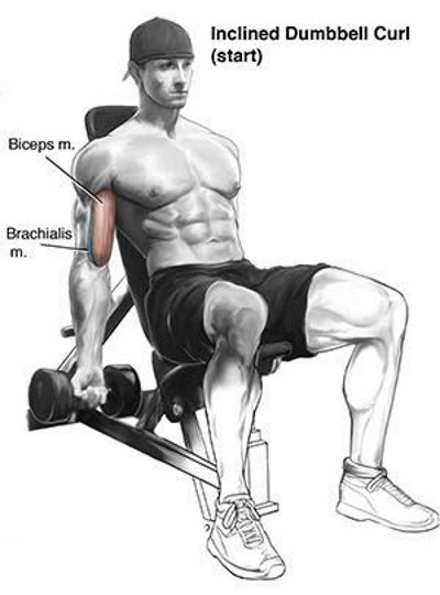 incline-dumbbell-curls