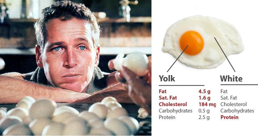 egg-myths