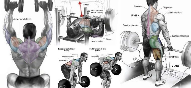 8-best-exercises-for-building-lean-muscle-mass
