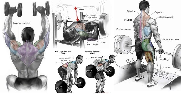 12 Tips to Help You Assemble Muscle and Get an Spectacular Physique